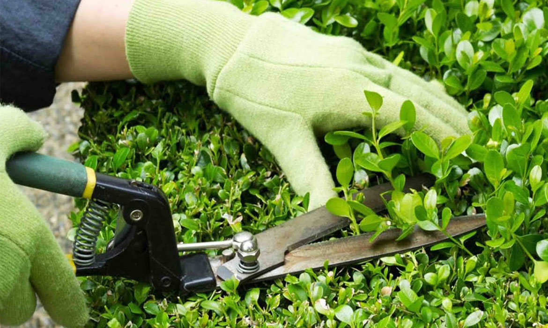 Quy trình dịch vụ chăm sóc bảo dưỡng cây cảnh